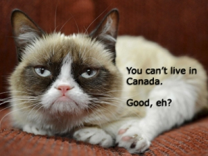 What a little bugger you are, Grumpy Cat