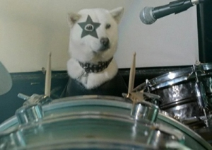 "Benjamin never sent a photo so here's a dog dressed as Kiss ""drumming"" up some support"